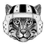 Wild cat Fishing cat Wild animal wearing rugby helmet Sport illustration Royalty Free Stock Photos