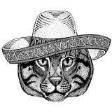 Wild cat Fishing cat Wild animal wearing sombrero Mexico Fiesta Mexican party illustration Wild west. Wild animal wearing sombrero Mexico Fiesta Mexican party vector illustration