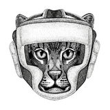 Wild cat Fishing cat Wild boxer Boxing animal Sport fitness illutration Wild animal wearing boxer helmet Boxing. Wild boxer Boxing animal Sport fitness Stock Photography