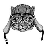 Wild cat Fishing catHand drawn image of animal wearing motorcycle helmet for t-shirt, tattoo, emblem, badge, logo, patch Royalty Free Stock Image
