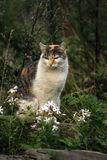 Wild cat and flowers Stock Photo
