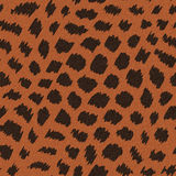 Wild cat fur. Abstract wild cat fur print. Seamless pattern Stock Images