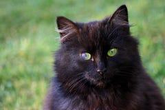 Wild cat green eyes Royalty Free Stock Photo