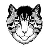 Wild cat Hand drawn image Isolated on white background Royalty Free Stock Photos