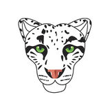 Wild cat, irbis, leopard, snow bars in  Royalty Free Stock Photography