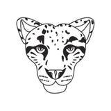 Wild cat, irbis, leopard, snow bars in  Stock Photography