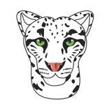 Wild cat, irbis, leopard, snow bars in  Stock Photos