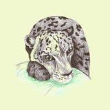 Wild cat, irbis, leopard, snow bars Royalty Free Stock Photos