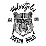 Wild cat Leopard Cat-o`-mountain Panther Biker, motorcycle animal. Hand drawn image for tattoo, emblem, badge, logo. Wild cat Leopard Cat-o`-mountain Panther Stock Image