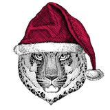 Wild cat Leopard Cat-o`-mountain Panther Christmas illustration Wild animal wearing christmas santa claus hat Red winter Royalty Free Stock Photo