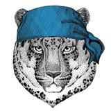 Wild cat Leopard Cat-o`-mountain Panther Wild animal wearing bandana or kerchief or bandanna Image for Pirate Seaman Royalty Free Stock Image