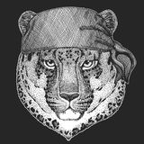 Wild cat Leopard Cat-o`-mountain Panther Cool pirate, seaman, seawolf, sailor, biker animal for tattoo, t-shirt, emblem. Wild cat Leopard Cat-o`-mountain Panther Royalty Free Stock Image