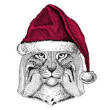 Wild cat Lynx Bobcat Trot Christmas illustration Wild animal wearing christmas santa claus hat Red winter hat Holiday Stock Photo