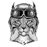 Animal wearing aviator helmet with glasses. Vector picture. Wild cat Lynx Bobcat Trot Hand drawn image for tattoo. Wild cat Lynx Bobcat Trot Hand drawn image for Stock Photography