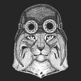 Wild cat Lynx Bobcat Trot Hand drawn image for tattoo, emblem, badge, logo, patch Cool animal wearing aviator. Wild cat Lynx Bobcat Trot Hand drawn image for Stock Image