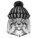 Wild cat Lynx Bobcat Trot Cool animal wearing knitted winter hat. Warm headdress beanie Christmas cap for tattoo, t. Wild cat Lynx Bobcat Trot Hand drawn image Royalty Free Stock Photos