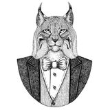 Wild cat Lynx Bobcat Trot Hipster animal Hand drawn illustration for tattoo, emblem, badge, logo, patch, t-shirt. Wild cat Lynx Bobcat Trot Hand drawn image for Royalty Free Stock Images