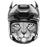 Wild cat Lynx Bobcat Trot Hockey image Wild animal wearing hockey helmet Sport animal Winter sport Hockey sport Stock Image