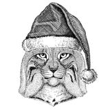 Wild cat Lynx Bobcat Trot wearing christmas hat New year eve Merry christmas and happy new year Zoo life Holidays Royalty Free Stock Photo