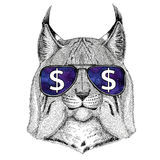 Wild cat Lynx Bobcat Trot wearing glasses with dollar sign Illustration with wild animal for t-shirt, tattoo sketch Royalty Free Stock Photos