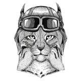 Wild cat Lynx Bobcat Trot wearing leather helmet Aviator, biker, motorcycle Hand drawn illustration for tattoo, emblem Royalty Free Stock Image