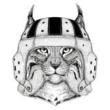 Wild cat Lynx Bobcat Trot Wild animal wearing rugby helmet Sport illustration Royalty Free Stock Image