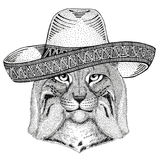 Wild cat Lynx Bobcat Trot Wild animal wearing sombrero Mexico Fiesta Mexican party illustration Wild west. Wild animal wearing sombrero Mexico Fiesta Mexican stock illustration