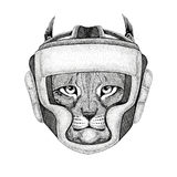 Wild cat Lynx Bobcat Trot Wild boxer Boxing animal Sport fitness illutration Wild animal wearing boxer helmet Boxing Stock Photos