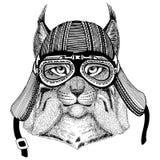 Wild cat Lynx Bobcat TrotHand drawn image of animal wearing motorcycle helmet for t-shirt, tattoo, emblem, badge, logo. Wild cat Lynx Bobcat Trot Hand drawn Royalty Free Stock Photos