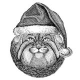 Wild cat Manul christmas hat New year eve Merry christmas and happy new year Zoo life Holidays celebration Santa Claus Royalty Free Stock Image