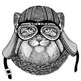 Wild cat Manul Hand drawn image of animal wearing motorcycle helmet for t-shirt, tattoo, emblem, badge, logo, patch. Wild cat Manul Hand drawn image for tattoo Stock Images