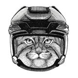 Wild cat Manul Hockey image Wild animal wearing hockey helmet Sport animal Winter sport Hockey sport Royalty Free Stock Photo