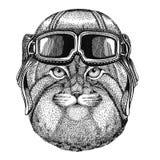Wild cat Manul wearing leather helmet Aviator, biker, motorcycle Hand drawn illustration for tattoo, emblem, badge, logo Stock Images