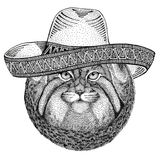 Wild cat Manul Wild animal wearing sombrero Mexico Fiesta Mexican party illustration Wild west. Wild animal wearing sombrero Mexico Fiesta Mexican party stock illustration