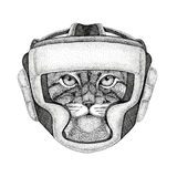 Wild cat Manul Wild boxer Boxing animal Sport fitness illutration Wild animal wearing boxer helmet Boxing protection. Wild boxer Boxing animal Sport fitness Royalty Free Stock Image