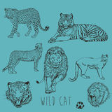 Wild Cat Marker Sketch Collection Royalty Free Stock Photography