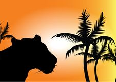 Wild cat and palm. Front of sun Stock Image
