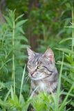Wild cat portrait Stock Images