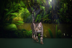 Wild cat in the rainforest Stock Photo