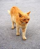Wild cat on road Stock Photo