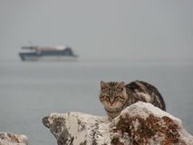 Wild cat on a rock. Near the lake Stock Images