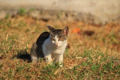 Wild cat sitting  on the grass Stock Photo