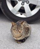 Wild cat sitting on road Stock Photo