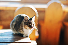 Wild cat sitting on table on sunlight, basking in the sun at fro stock photos