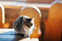 Wild cat sitting on table on sunlight, basking in the sun at fro. Zen morning stock photos