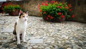 Wild cat on a street Stock Photo