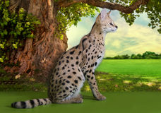 Wild cat on a sunny day under the old tree Stock Image