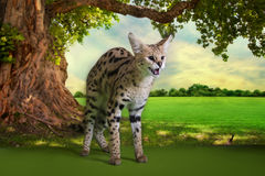 Wild cat on a sunny day under the old tree Royalty Free Stock Image