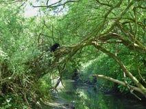 Wild Cat In Tree stock photography