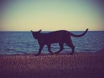 Wild cat walking along wall at sea Stock Images